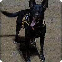 Adopt A Pet :: Anika - Costa Mesa, CA