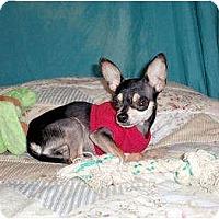 Adopt A Pet :: Rico - Mooy, AL