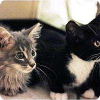 Adopt A Pet :: Brothers Carlos & Gregory - Chicago, IL