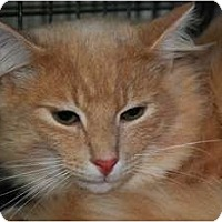 Adopt A Pet :: Brisco - Monroe, GA