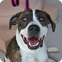Adopt A Pet :: Bay - Gilbert, AZ