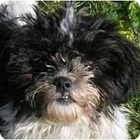 Adopt A Pet :: Jodi - Mays Landing, NJ