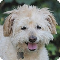 Adopt A Pet :: Dunnigan - La Costa, CA