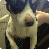 Adopt A Pet :: Stark - Justin, TX