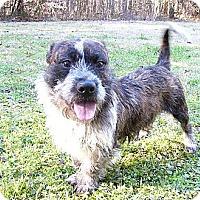 Adopt A Pet :: Grover - Mocksville, NC