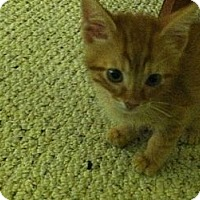 Adopt A Pet :: Eli - Shavertown, PA