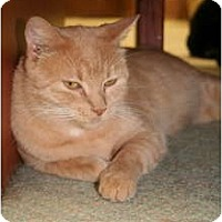 Adopt A Pet :: Vira - Bonita Springs, FL