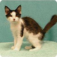 Adopt A Pet :: Daisey - Sacramento, CA