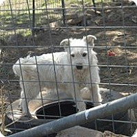 Adopt A Pet :: JASPER - Childress, TX