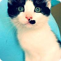 Adopt A Pet :: Pooka - Green Bay, WI