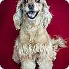 Adopt A Pet :: Princess