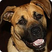 Adopt A Pet :: Lola - Saskatoon, SK