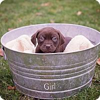 Adopt A Pet :: Bonnie - Salem, MA