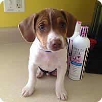 Adopt A Pet :: Winston - Silver Lake, WI