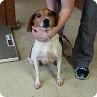 Adopt A Pet :: Jack - Paris, IL