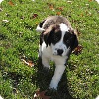 Adopt A Pet :: Elijah - mooresville, IN
