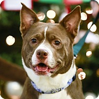 Adopt A Pet :: Diamond - Kettering, OH