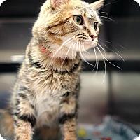 Adopt A Pet :: Rylee - Appleton, WI