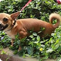 Adopt A Pet :: Brian - San Francisco, CA