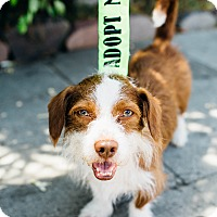 Adopt A Pet :: Willard - Los Angeles, CA