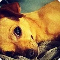 Adopt A Pet :: Taja - Grand Bay, AL