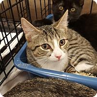 Adopt A Pet :: Morgan - Berkeley Hts, NJ