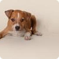 Adopt A Pet :: Jake - Rowayton, CT