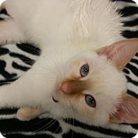 Adopt A Pet :: Pluto - St. Louis, MO