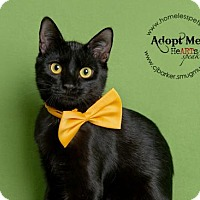 Adopt A Pet :: Jack - Houston, TX
