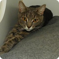 Adopt A Pet :: Abbey - Lowell, MA