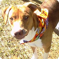 Adopt A Pet :: Zeke - Lebanon, ME