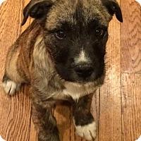 Adopt A Pet :: Jack Ritter - Independence, MO