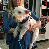 Adopt A Pet :: Gidget - Valencia, CA