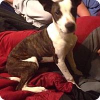 Adopt A Pet :: Molly - Broken Arrow, OK