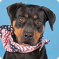 Adopt A Pet :: Matt - Hillsboro, NH