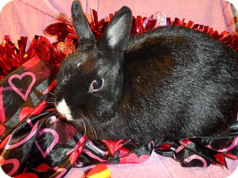 Dwarf Mix for adoption in Hillside, New Jersey - Feisty
