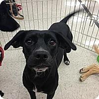 Adopt A Pet :: Maddie - Vista, CA