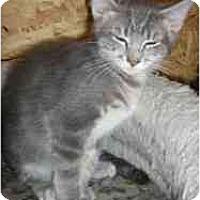 Adopt A Pet :: Gatsby - Strathmore, AB