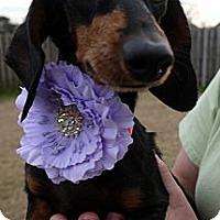 Adopt A Pet :: Carol - Baton Rouge, LA