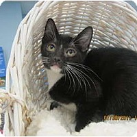 Adopt A Pet :: Heidi - Sterling Hgts, MI