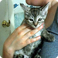Adopt A Pet :: Jackie - Pensacola, FL