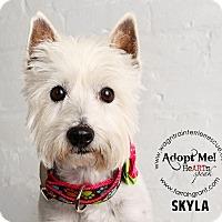 Adopt A Pet :: Skyla - Omaha, NE