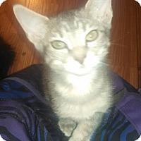 Adopt A Pet :: Georgette - North Highlands, CA