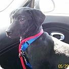 Adopt A Pet :: Renegade Adoption Pending Congrats Hanerfield Fam'
