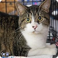 Adopt A Pet :: KC - Merrifield, VA