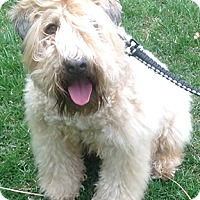 Adopt A Pet :: Clancy in OH - North Kansas City, MO