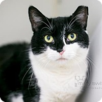 Adopt A Pet :: Maeve - Reisterstown, MD