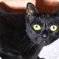 Adopt A Pet :: Jade - Sarasota, FL