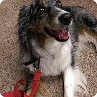Adopt A Pet :: Troy - Ogden, UT