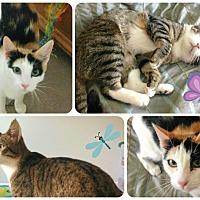 Adopt A Pet :: Audrey - Lancaster, CA